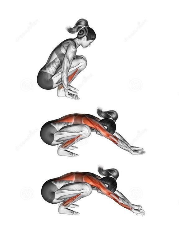 Động tác yoga tác động tới các cơ như thế nào? - 8
