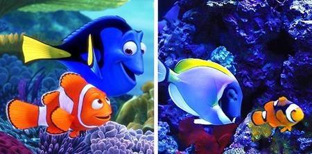 """Cặp đôi Marlin và Dory trong """"Đi tìm Nemo"""" nếu bơi ra ngoài đại dương thực sự thì sẽ mang dáng vẻ thế này"""