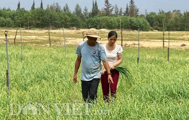 Bà Hiệu, cán bộ phòng nông nghiệp Bình Sơn cùng ông Là kiểm tra ruộng tỏi trồng.