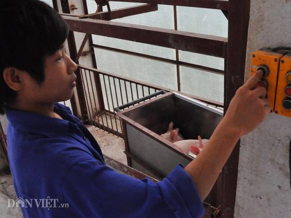 Công nhân chuyển đàn lợn giống bằng cầu thang máy tại trang trại của ông Long ở huyện Thanh Oai (Hà Nội).