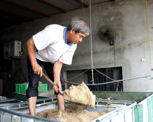 Bịch nấm được đóng gói từ mùn cưa gỗ bồ đề.