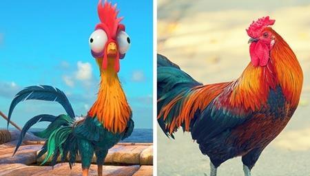 """Còn đây chính là gà HeiHei trong """"Moana"""" phiên bản đời thực"""