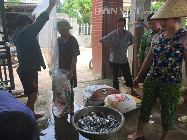 Cá giống nhà ông Lượng luôn tấp nập người đến thu mua với giá từ 700-800 đồng/con, mỗi tháng ông đưa ra thị trường hơn 280.000 con cá giống. Ảnh: Nguyễn Hoàn.