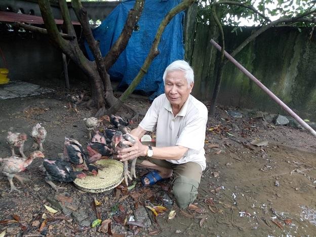 Ông Chu Trọng Tại đang nuôi thí điểm gà Đông Tảo. Ảnh: Thu Thủy.