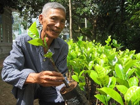 Chiết, ghép và nhân bán giống mít quý hiếm có gốc gác từ xứ sở vạn chùa-Myanmar cũng là 1 nguồn thu đáng kể của gia đình lão ông Út Mẫn.