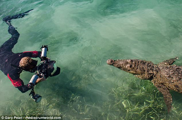 Liều lĩnh bơi sát cá sấu 3m để chụp ảnh cho nét - 6