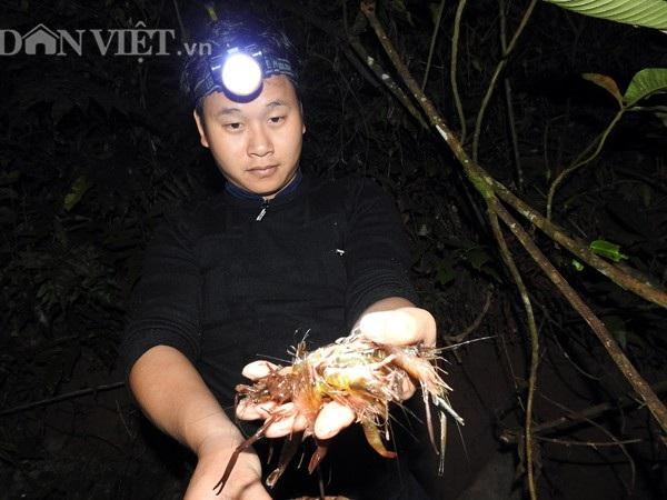 """Theo chân """"thợ săn"""" người Dao đi đêm bắt tôm khe giữa đại ngàn - 4"""