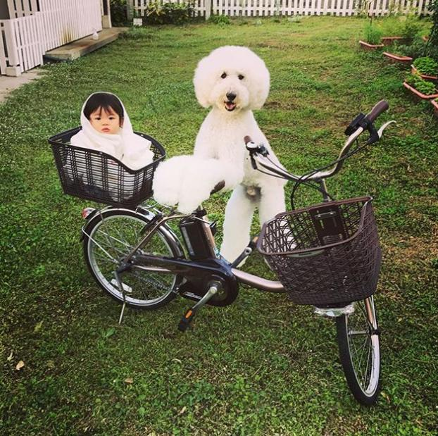 Bé chưa biết đi xe đạp đâu nhưng có Riku ở bên thì Mame yên tâm lắm