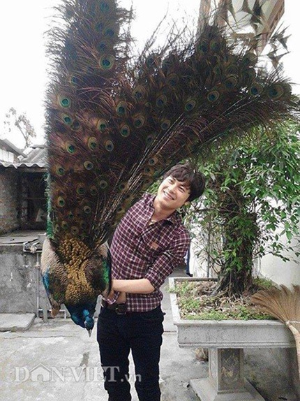 Anh Quỳnh bên chú chim công xanh quý hiếm tại trang trại của gia đình.
