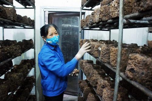 Khi bịch nấm không còn sử dụng được, công nhân sẽ ủ thành phân hữu cơ để bón cho rau.