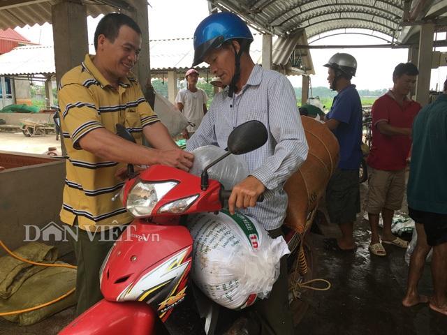 Quang cảnh thu mua cá giống tại trang trại của gia đình ông Lượng. Hiện ông đang tạo công ăn việc làm  ổn định cho hơn 10 nhân công trong thôn. Ảnh: Nguyễn Hoàn.