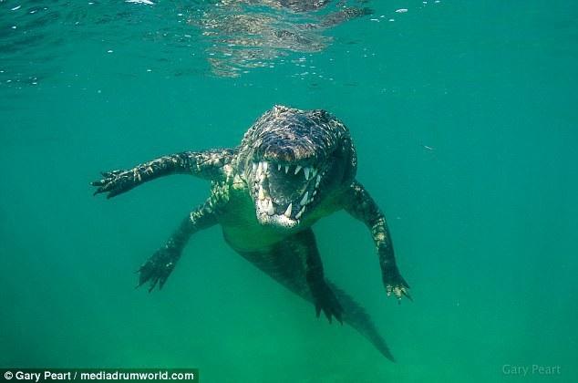 Liều lĩnh bơi sát cá sấu 3m để chụp ảnh cho nét - 7