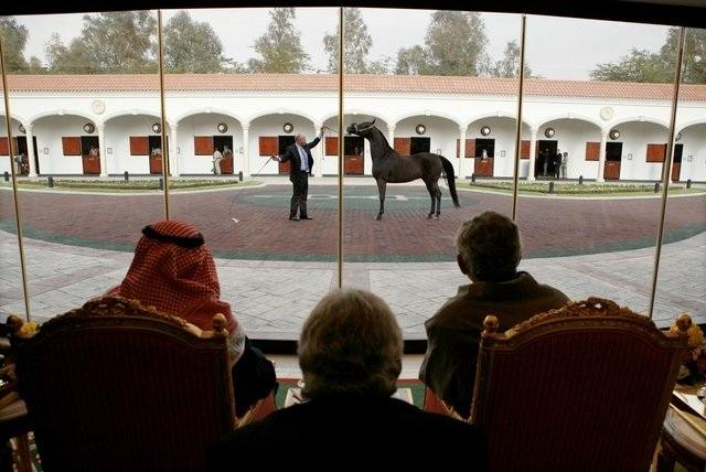 Dân chơi Ả Rập rất thích ngựa quý.