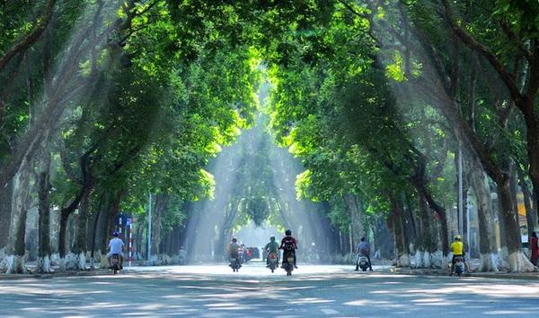 Nhiều con đường rợp bóng cây xanh giờ chỉ còn trong ký ức của người Hà Nội.
