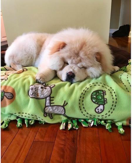 Chú cún Todd hiện đang lâm bệnh nặng