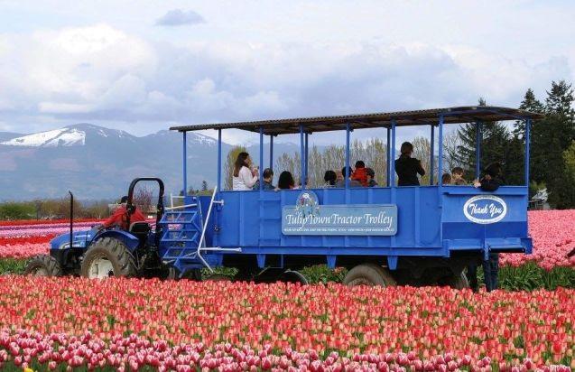 Mỹ: 7 cánh đồng hoa tulip không nên bỏ qua trong mùa xuân này - 2