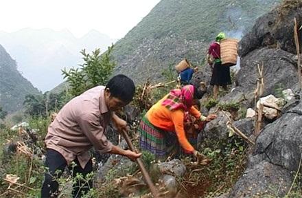 Thầy Nguyễn đi làm nương cùng dân bản Lũng Mần.