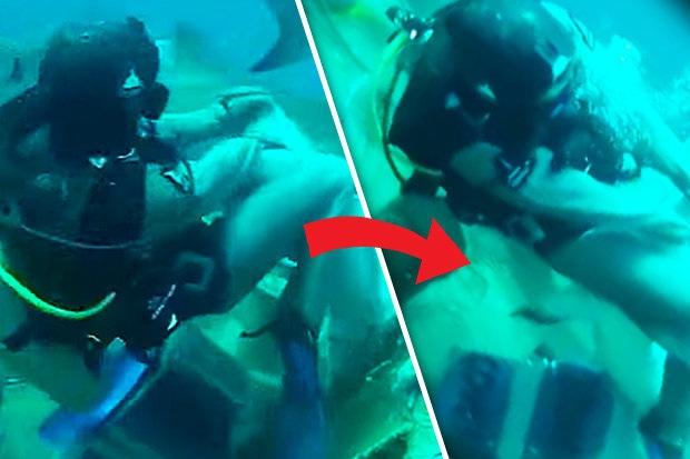 Thợ lặn cố gắng đẩy con cá mập ra xa.