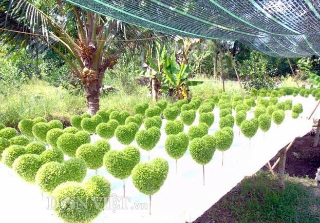 Để tạo ra sản phẩm cây may mắn đòi hỏi phải khéo tay, kiên trì, tỉ mỉ cao