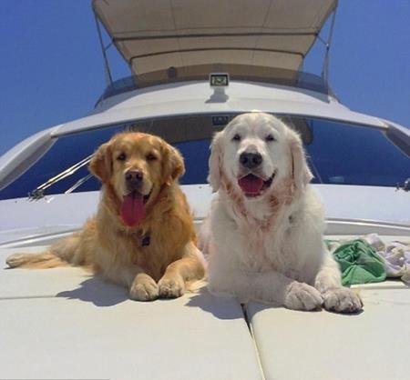 Hai chú chó của Alexis Sanchez luôn được chủ nhân hết mực cưng chiều