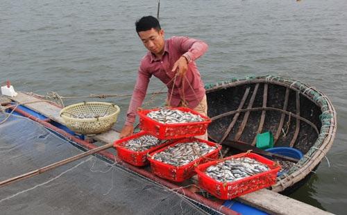 Mô hình nuôi cá vược, cá hồng của nông dân trẻ Lê Văn Công đang phát huy hiệu quả. Ảnh:  Ngọc Vũ