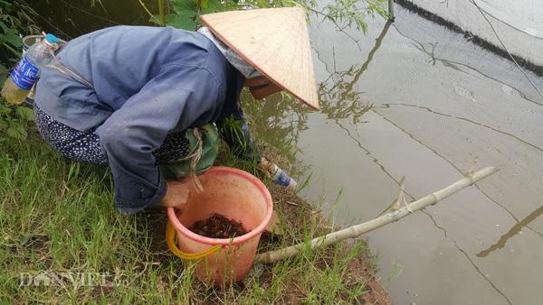 Chỉ với các chai nhựa phế thải, người dân Kim Sơn có thể bắt cáy dễ dàng.