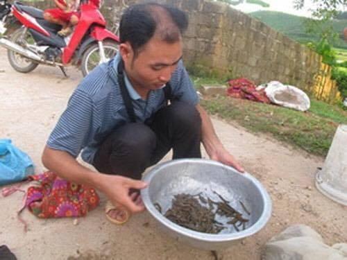 Người dân Nghệ An bắt đỉa về bán cho thương lái. Ảnh tư liệu