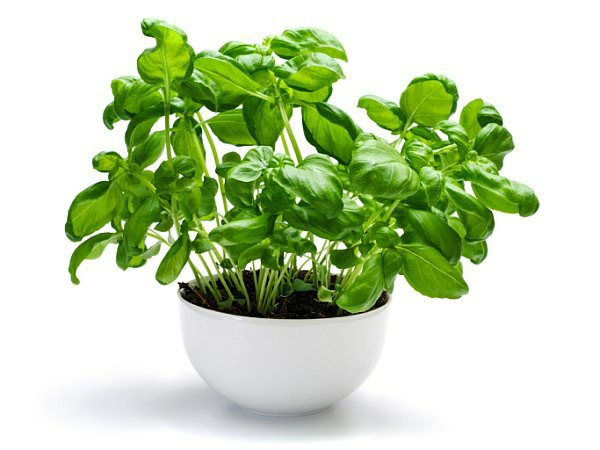 18 loại thực phẩm giàu vitamin K - 3