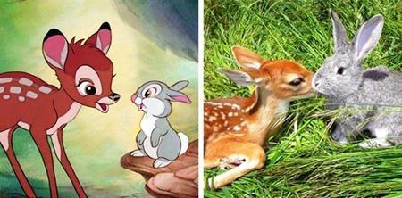 """Tình bạn giữa nai và thỏ hóa ra không chỉ tồn tại trong bộ phim hoạt hình """"Bambi"""" mà còn có cả trong thế giới động vật"""