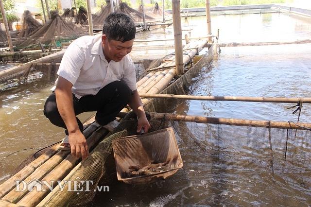 Nhờ bén duyên với cá bống bớp anh Sơn đã có trong tay nhiều tỷ đồng.