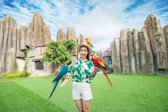 Show trình diễn với những chú chim tuyệt đẹp