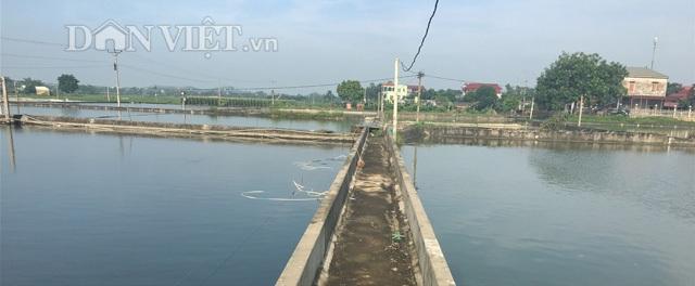 Mô hình nuôi cá ương giống diện tích hơn 10 mẫu mặt nước của ông Nguyễn Văn Lượng, thôn Trung, xã Ngọc Thiện , huyện Tân Yên (Bắc Giang). Ảnh: Nguyễn Hoàn.