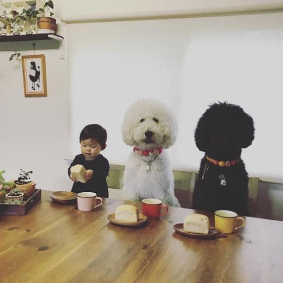 Chú chó Poodle lông xù màu đen là người bạn thân thiết của cả hai