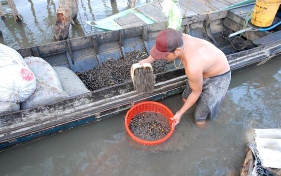Ốc ở miền Tây sống và phát triển nhiều nhất là ở ao, kênh mương và đồng ruộng