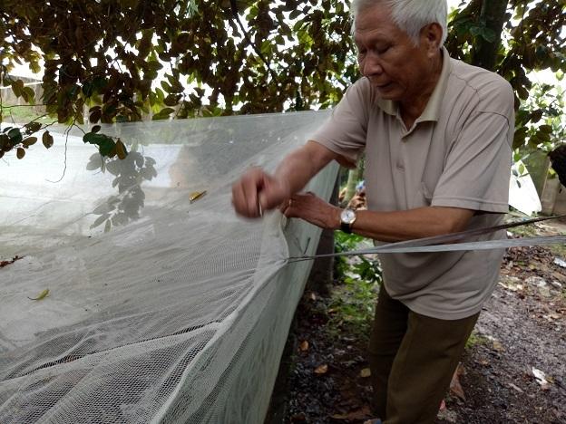 Ông Chu Trọng Tại đang mắc màn cho đàn ếch nuôi. Ảnh: Thu Thủy.