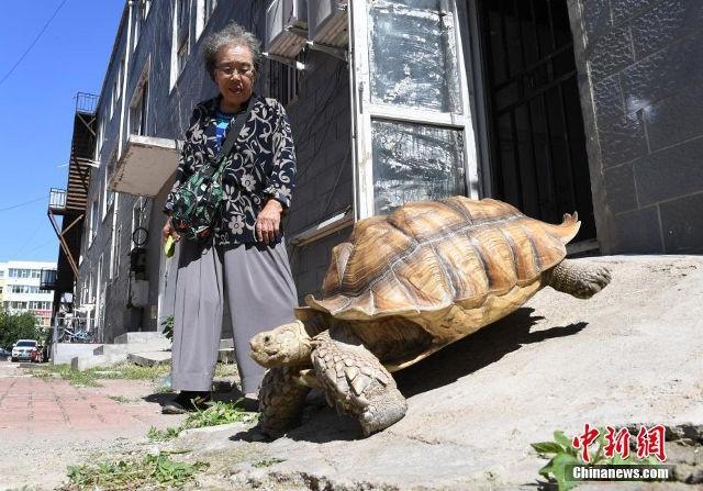 Bà Hao Yulin dắt rùa đi dạo