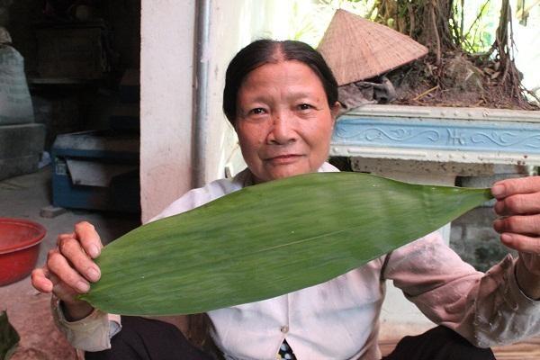 Lá tre mà cơ sở của chị Đặng Thị Triệu thu mua lấy từ cây tre Bát Độ với chiều dài 45cm, chiều ngang 10cm.