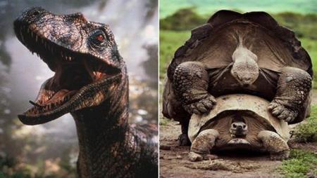 """Âm thanh của một số loài khủng long trong """"Jurassic Park"""" từng khiến không ít khán giả rợn tóc gáy nhưng thực chất, chúng được tạo ra từ tiếng loài rùa đang… giao phối."""