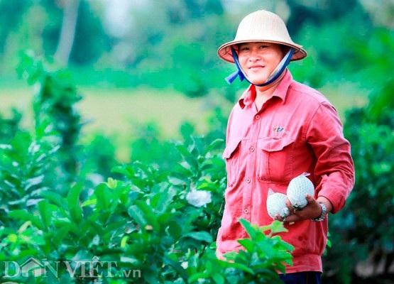 Bỏ lúa, trồng ổi lê Đài Loan, thu 30 triệu/tháng - 1
