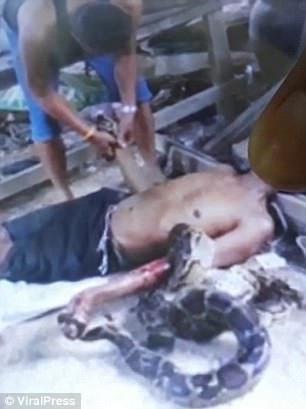 Sawan bị con trăn siết tới chết.