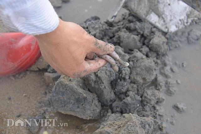 Cận cảnh giun biển nhiều nhung nhúc, dân đào mỏi tay thu tiền triệu - 7