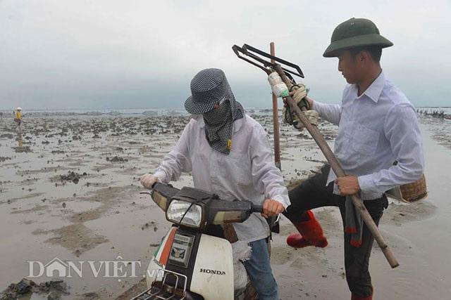 Cận cảnh giun biển nhiều nhung nhúc, dân đào mỏi tay thu tiền triệu - 8