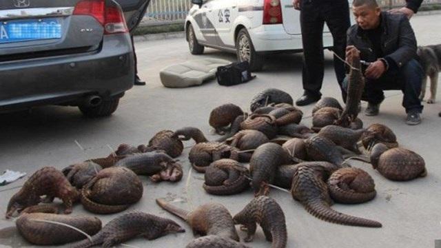 Tê tê buôn bán trái phép. (Nguồn: shanghaiist.com)