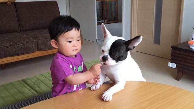 Kanato phản ứng chậm, tạo cơ hội cho chú cún ăn tiếp miếng thứ hai