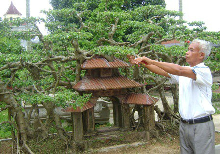 Một góc Phố cổ Hà Nội được ông Ngọ tái hiện bằng cây sanh có một không hai.