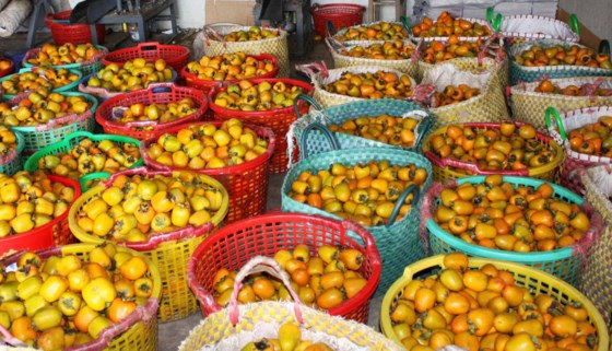 Hồng Đà Lạt sau khi tập kết tại các vựa sẽ được chuyển tới các thị trường chính như Hà Nội, TPHCM, các tỉnh miền Trung...