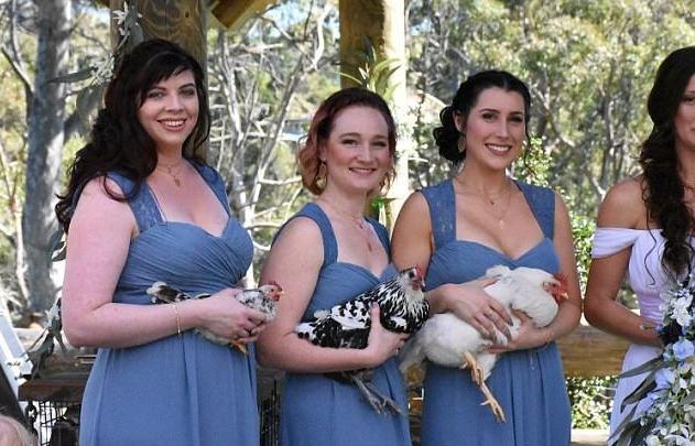 Hai cô gà mái tên là Potts và Luna còn chú gà trống tên Gaston