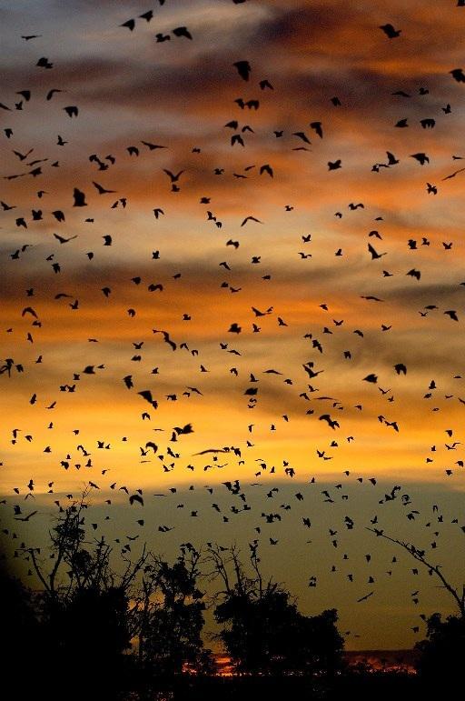 Những cuộc di cư đáng kinh ngạc của thế giới động vật - 5
