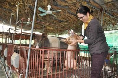 Để lợn có chất lượng thịt sạch, bà Liên còn dùng các thảo dược để phòng, trị bệnh cho đàn lợn.