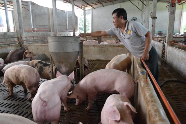 Việc Trung Quốc đồng ý mở cửa thị trường đối với thịt lợn, lợn nuôi của Việt Nam sẽ giúp người chăn nuôi trong nước tiêu thụ được sản phẩm.